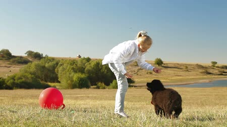 rescue dog : Child Playing With Puppy Newfoundland Outdoor