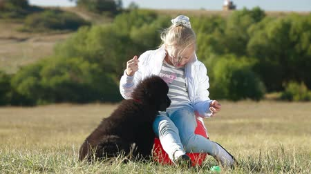 rescue dog : Little Blond Girl Feeding Newfoundland Dogs Outdoor