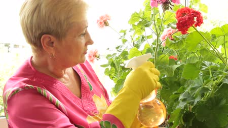 герань : Mature woman caring for flowers in pots