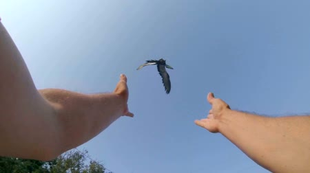 dove of peace : SLOW MOTION: Male hands released dove into blue sky