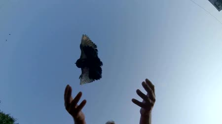 subir : SLOW MOTION: Male hands released dove into blue sky