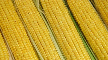шелуха : Fresh sweet corn background