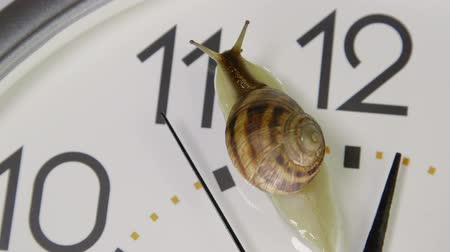 minute hand : Snail crawling across face of clock