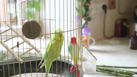 animais e animais de estimação : Budgie And Plastic Friend In The Cage