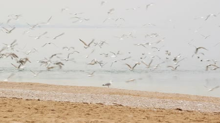 urban birds : Frightened flock of seagulls flying up from the seaside