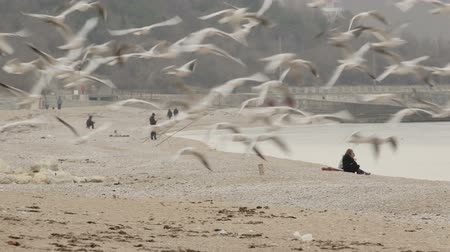 urban birds :  Flock of seagulls flying up from the seaside