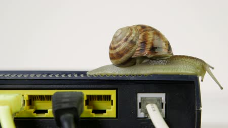 širokopásmové : Snail crawling slowly across router network hub with patch cable