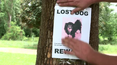 poszter : Pet owner put up poster Lost Dog throughout the neighbourhood offering a reward Stock mozgókép
