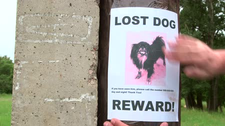 perdido : Pet owner put up lost pet sign offering a reward throughout the neighbourhood