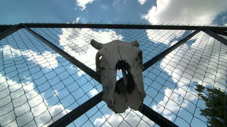 gates : Dolly: Cow skull and padlock on private iron wire gate
