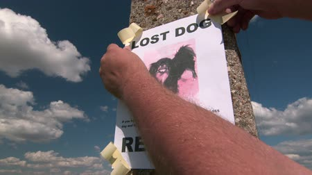 perdido : Lost pet sign posting with dog image on a pole