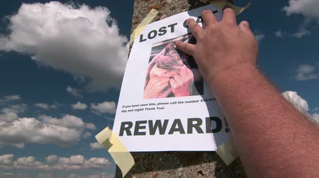 perdido : Lost pet sign posting with cat image on pole against the sky