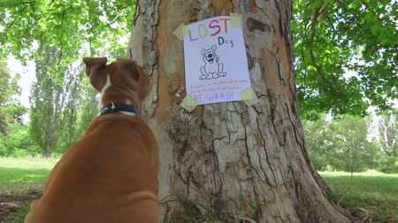 perdido : Puppy looking at missing pet poster on tree trunk