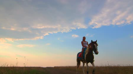 lovas : Young girl riding horse across the field in evening wide angle Stock mozgókép
