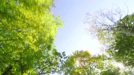 droga : Road trip through the sunny forest low angle shot
