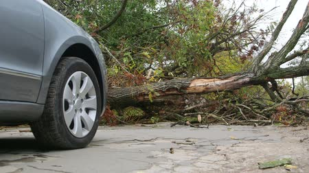 broken crash : Road obstructed by fallen tree Stock Footage