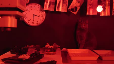 negatives : Photography darkroom equipment and reagents to make prints ticking clock and a gray cat