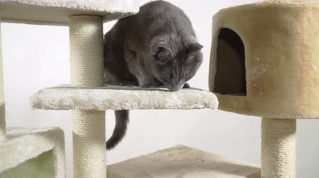 mensagens : Floor to ceiling cat trees with multiple levels and platforms. Indoor cat playground providing feline a safe place to rest, exercise and play. Vídeos
