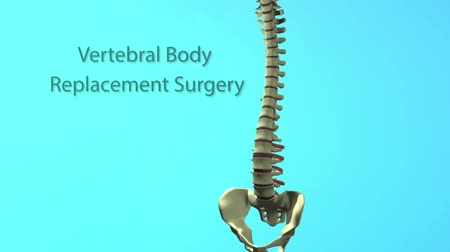kordon : Spinal Animation Vertebral Body Stok Video