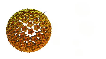 hpv : 3D Concept Closeup Of Human Cancer Papilloma Virus (Hpv) Stock Footage