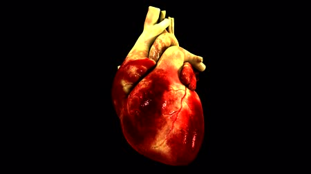 damar : Anatomical Model Of Heart Stok Video