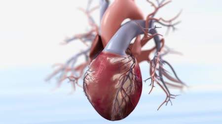Obstruction Of The Heart Vessels