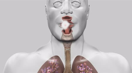 bleeding : The Respiratory and Circulatory System in the Human Body Stock Footage