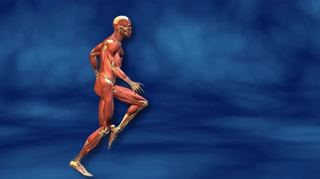 fatty acid : Human muscular system. Running Man