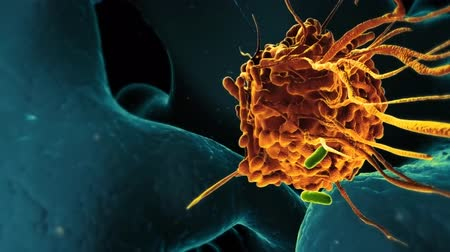 eu : Macrophage under the microscope. Vídeos