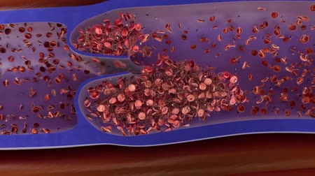 erythrocyte : blood clotting animation