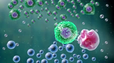 antibody : The T cells kill cancer cells. They additionally destroy the tumor blood vessel