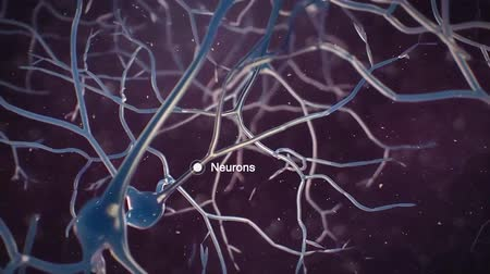 nervous : neurons and signal Stock Footage