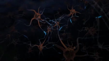 percepção : neurons in the brain