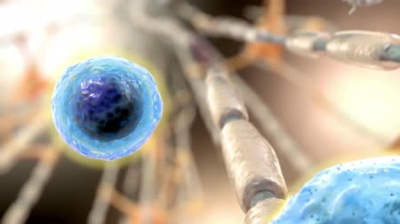 axon : Plasma cells Stock Footage