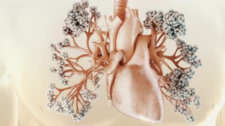 blood circulation : The circulatory and respiratory systems work together to circulate blood and oxygen throughout the body.