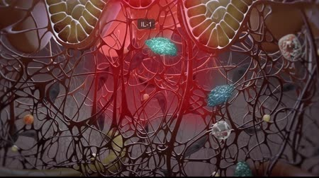 organizma : The environmental and cellular participants in the regulation of skin barrier function are presented in an exciting animated video that describes the immune responses in healthy and psoriatic skin. Stok Video