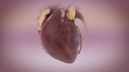 infarct : Animated model of heartbeat in different styles and different materials. Realistic rendering 3D model of the human heart.
