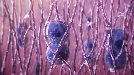 cell division : In biology, regeneration is a process of regeneration, restoration and growth that makes genomes, cells, organisms and ecosystems resistant to natural fluctuations. Stock Footage