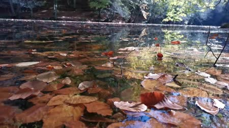lake : Autumn Leaves Water Reflection Stok Video