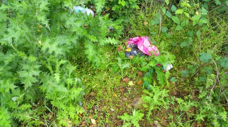 пластилин : Plastic Bag Lies In View Of Fern Plantation Стоковые видеозаписи