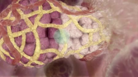 göğüs : 3D Medical Animated Mammary gland stem cells