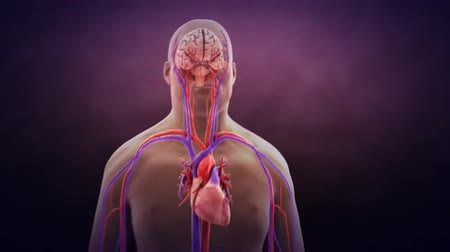 zihinsel : 3D Medical Animation of the Cerebral circulation Stok Video