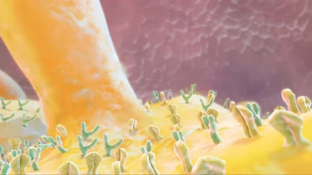 glicose : The Medical animation of receptors embedded in the plasma membrane of cells