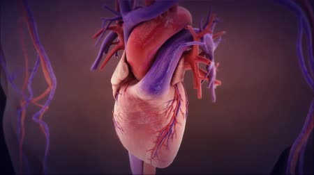 neve : Medical Animation of Endocarditis. Beating heart