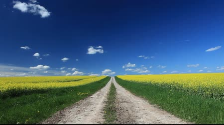 yolları : Lane and canola field under blue sky