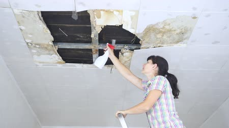 kalıp : Young Woman cleaning mold on ceiling.Ceiling panels damaged huge hole in roof from rainwater leakage.Water damaged ceiling. Stok Video