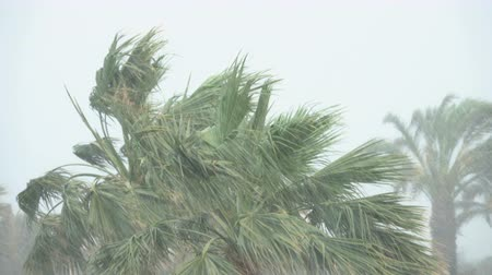 monszun : Palm Trees Blow in Strong Wind of Tropical Storm. Hurricane Rains. Cyclone Stock mozgókép