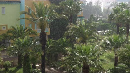 monszun : Tropical wind and rain drops falling on the green palm tree leaves. Hurricane Rains. Cyclone. Tropical rainstorm in the jungle against the backdrop of the palm tree.