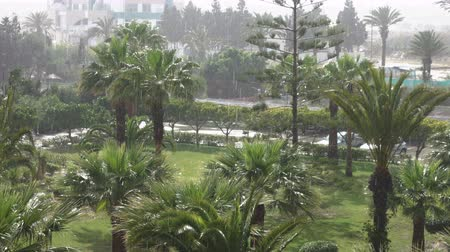 ulewa : Tropical wind and rain drops falling on the green palm tree leaves. Hurricane Rains. Cyclone. Tropical rainstorm in the jungle against the backdrop of the palm tree.