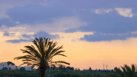 tunisia : Sunset over white houses and palms. Silhouette of a palm tree over the sunset. Time Lapse. Timelapse. Stock Footage